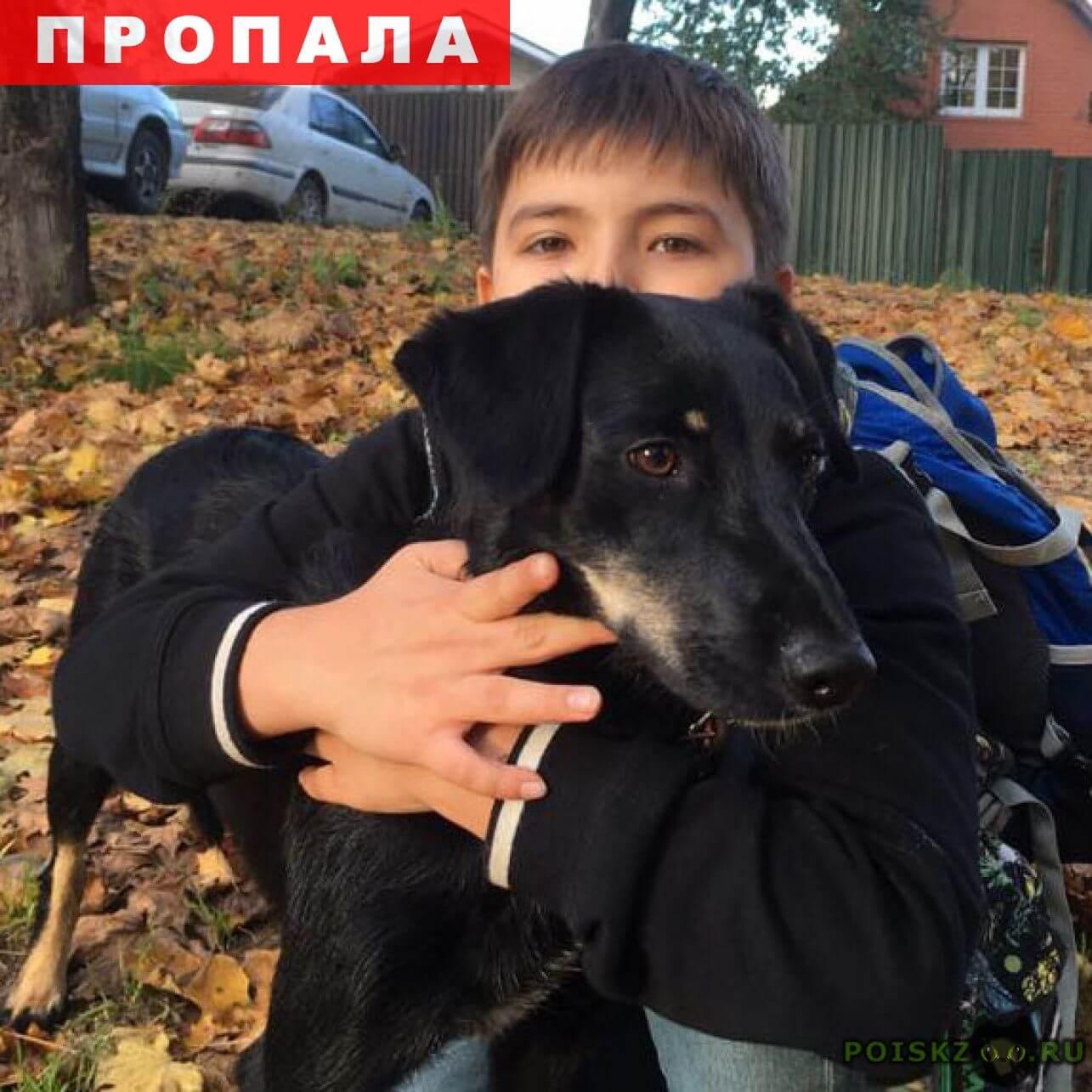 меня найденные животные москва и московская обл выполнения